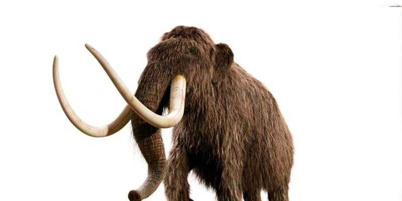 """Tarlasını sürerken """"antik fil fosili"""" buldu"""