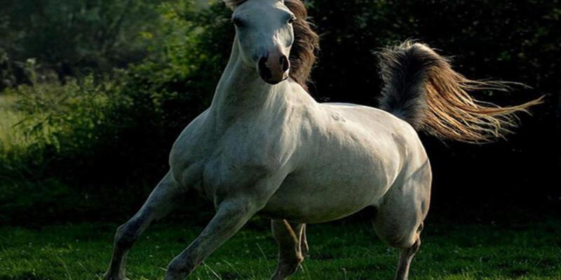 Atlara don giydirmeyene 500 euro ceza