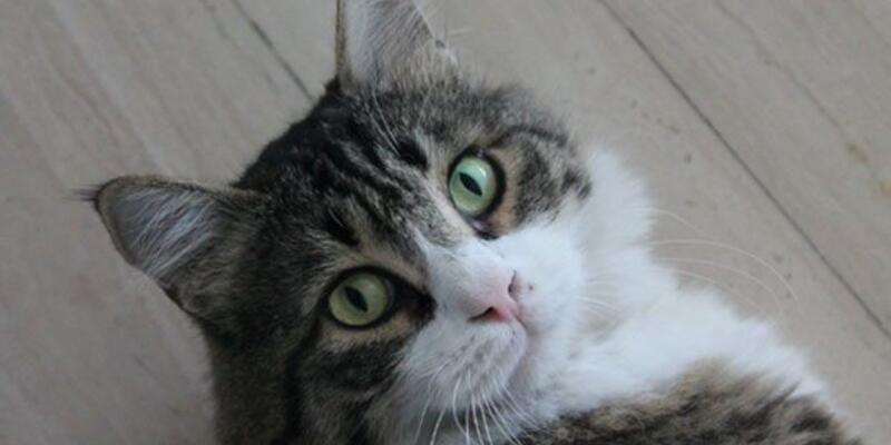 CHP'nin kedisi Şero'dan Özkes'e: ''Bahçeli seni aramayacak''