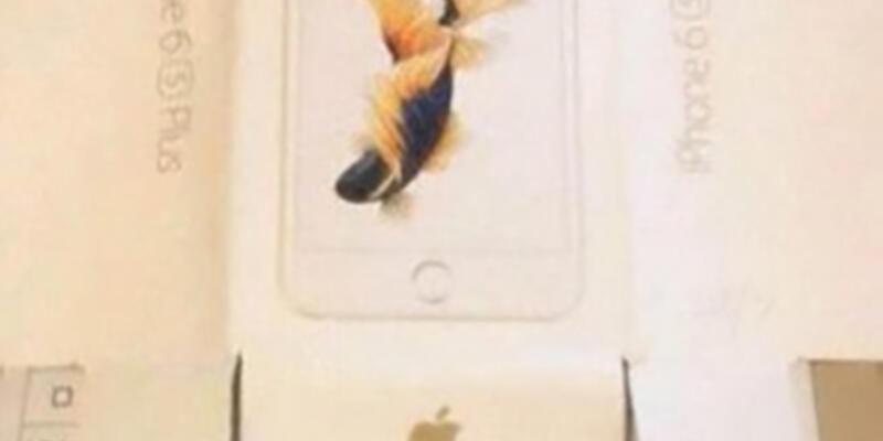 iPhone 6s Plus görüntülendi!