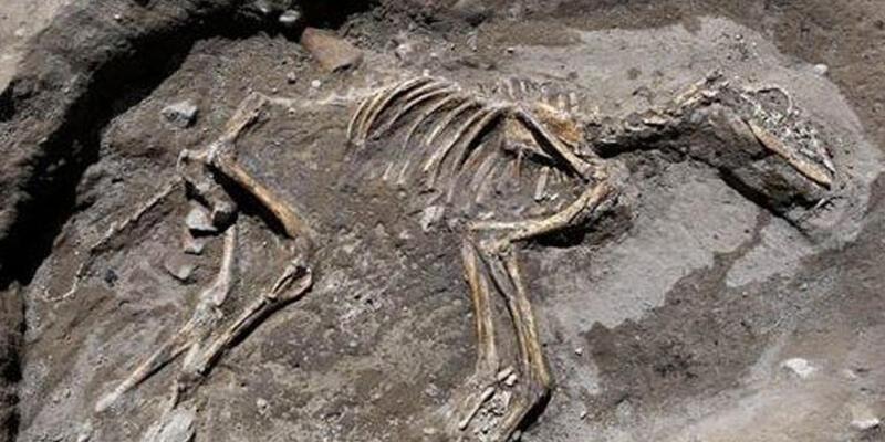 Van'da 3 bin yıllık köpek iskeleti bulundu