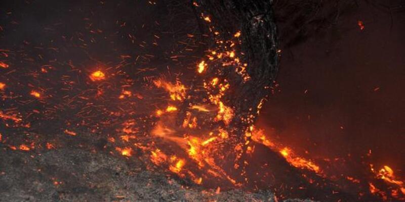 Osmaniye'de yangın