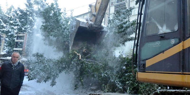 İş makineleriyle ağaçlara zarar verdiler