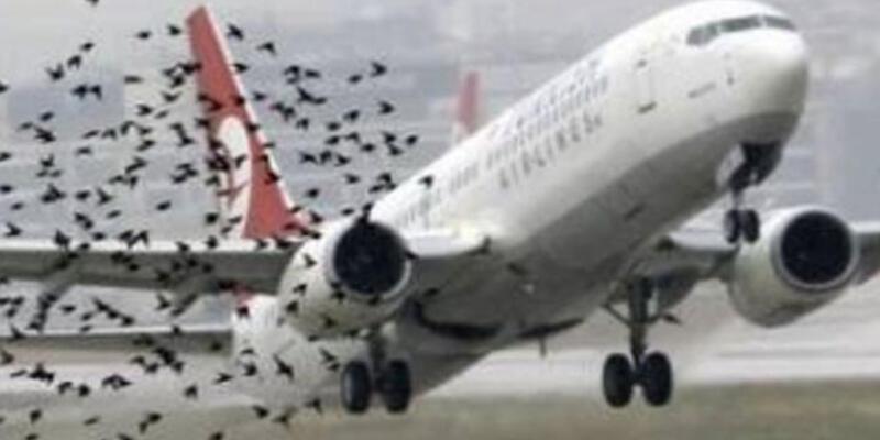 THY uçağı kalkışta kuş sürüsüne çarptı