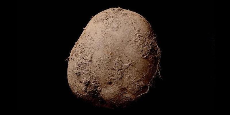 Patates fotoğrafına 1 milyon euro