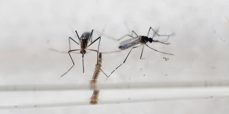 Zika virüsüne aşı ancak 10 yıl sonra çıkabilecek