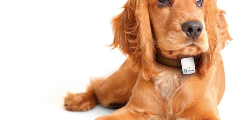 Evcil hayvanlar için giyilebilir teknolojiler