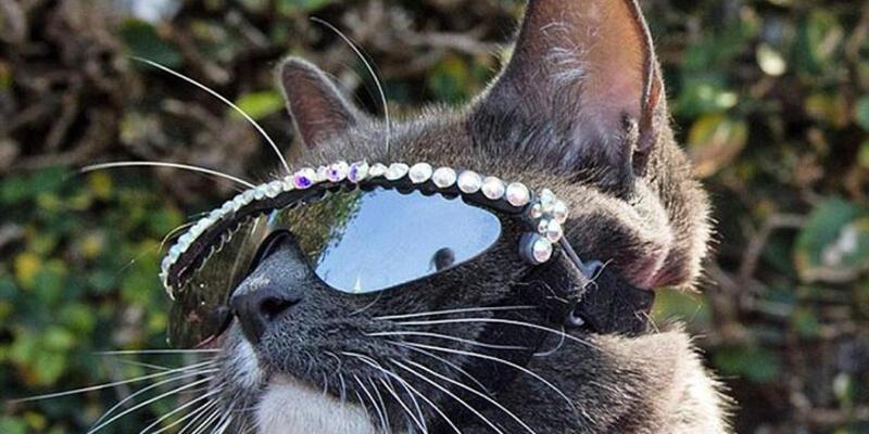 Güneş gözlüklü kedinin göz kapakları yokmuş!