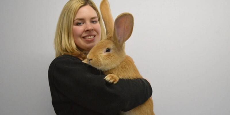 İskoçya'da dev tavşana yuva aranıyor