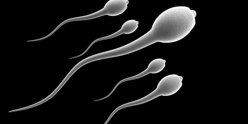 Farelerde kök hücreden sperm elde edildi