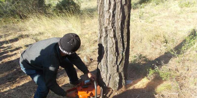 Kestiği ağacın altında kalan kişi yaşamını yitirdi