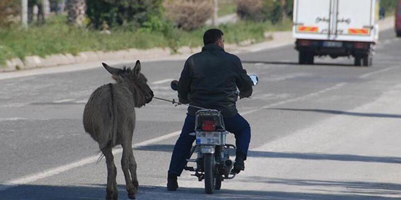 Karayolunda eşeğe motosikletli eziyet