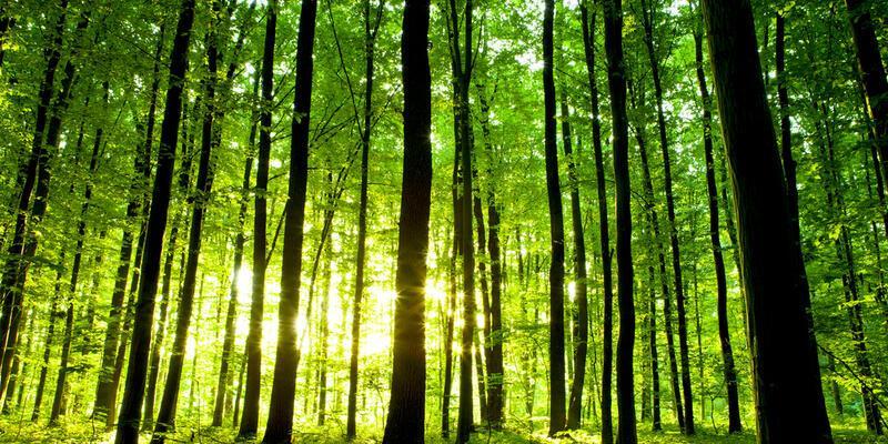 Aşırı karbon salınımı yeşili artırdı