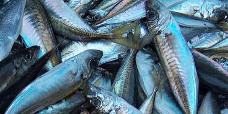 Yasaklardan sonra balık fiyatları yükseldi