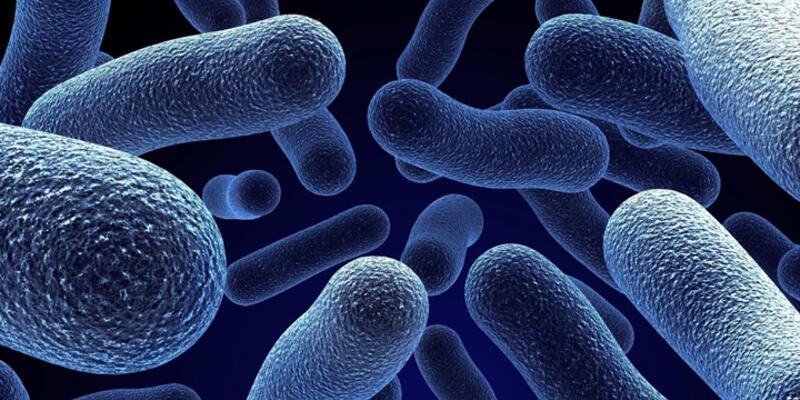 Tüm antibiyotiklere bağışıklık sahibi bakteri bulundu