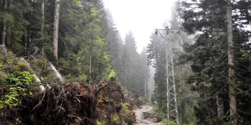 'Yeşil Yol'da ağaç katliamı