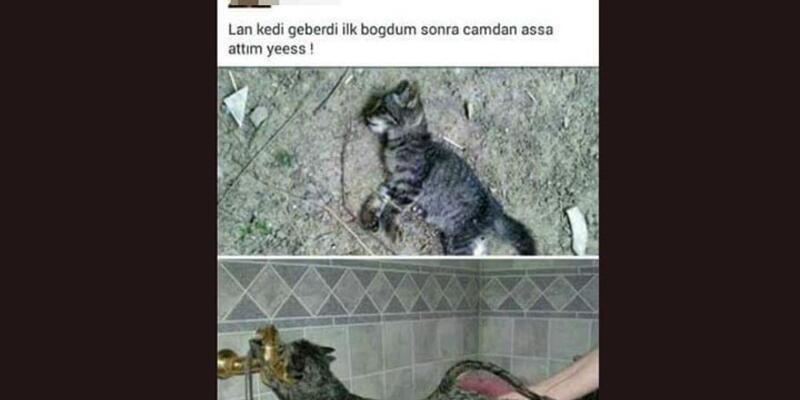 Sosyal medyada 'kedi' ile şaka yapması başına iş açıyordu