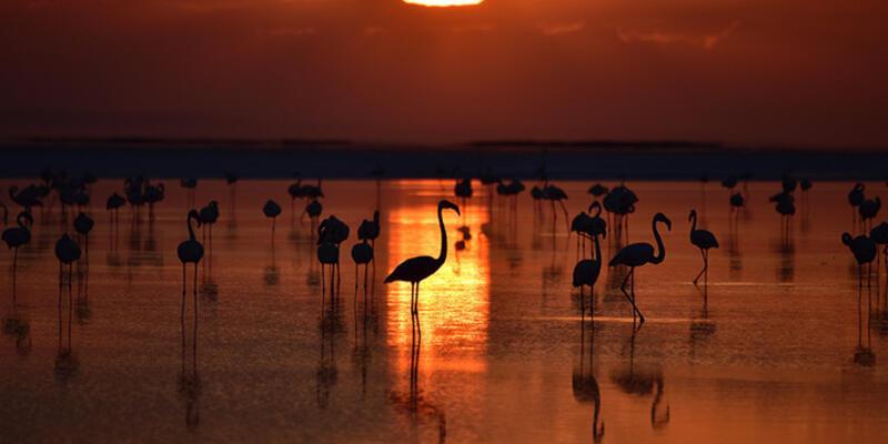 Tuz Gölü'nde yavru flamingolar kuluçkadan çıktı
