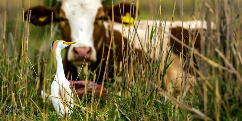 Et fiyatları için kritik veri açıklandı