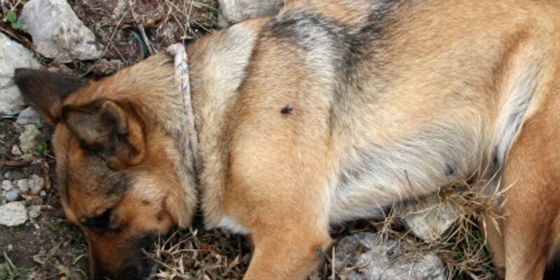 Arnavutköy'de köpeğe vahşet