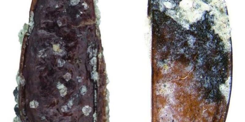 Antarktika'da yeni bir böcek türünün fosilleri bulundu