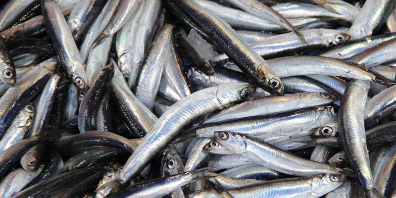 Balık fiyatları yeniden yükselişe geçti