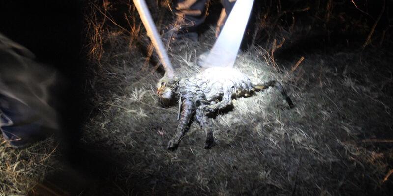 Avcı köpeği kuyudaki kediyi kurtardı