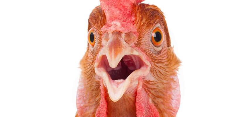 Greenpeace aktivistlerine 'tavuk' davası