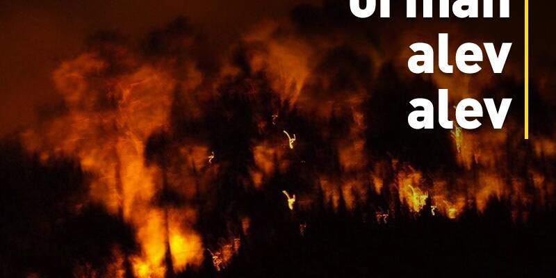 Sürmene'de orman yanıyor