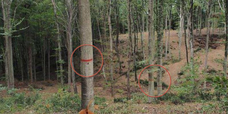 Belgrad Ormanı'nda ağaçlar işaretlendi
