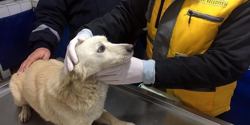 Tekirdağ'da asansör boşluğuna düşen köpek kurtarıldı