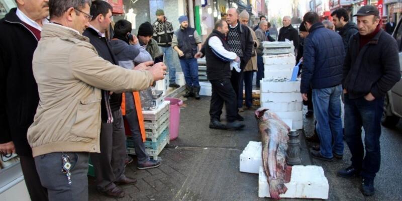 2,2 metrelik balık yakaladılar