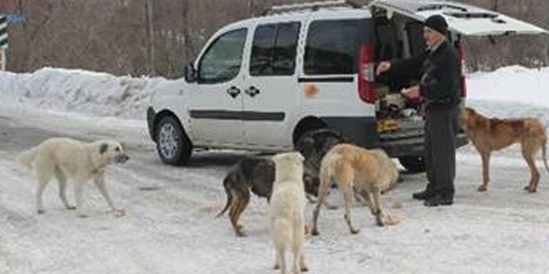 Köpekleri doyurmak için her gün 50 kilometre yol gidiyor
