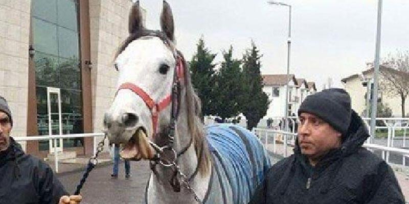 Halis Karataş'ın tayı Katarlı işkadınına satıldı
