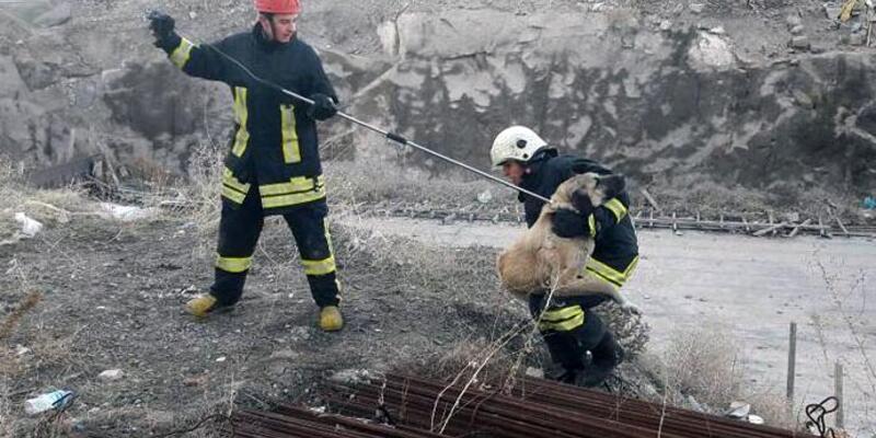 İnşaat demirleri altında kalan köpek kurtarıldı