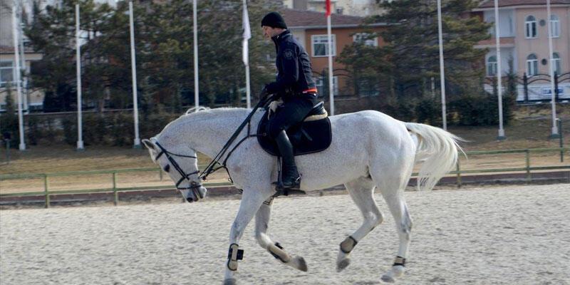Pony atlar ilk kez yarışacak