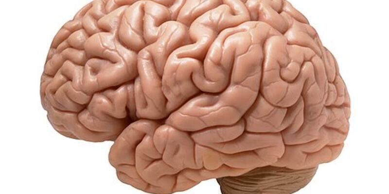 Bilim insanlarından beynin gizemini çözecek buluş