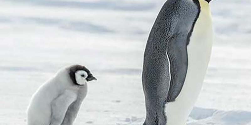 Dünyanın en eski penguen fosili bulundu