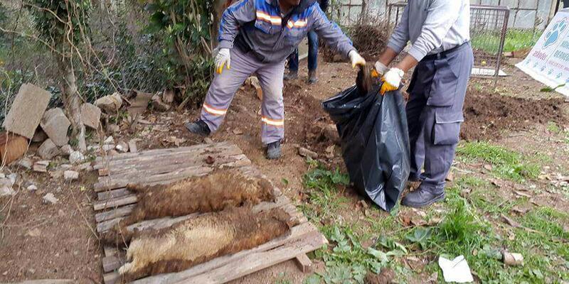 Kedi Köyü mezarları oldu: İki dernek birbirine girdi