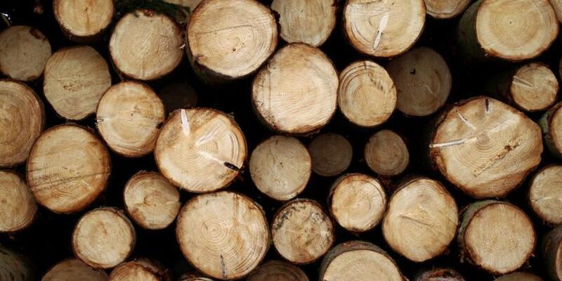 2,4 milyar insanın yemeği odunla pişiyor