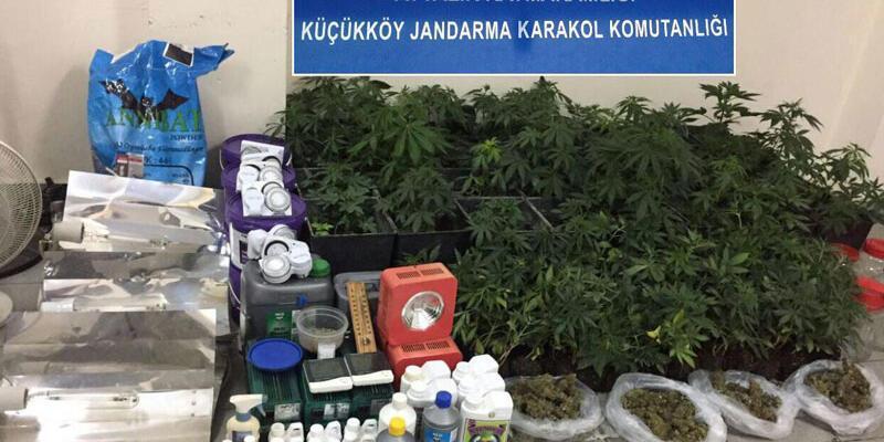 Evde uyuşturucu yetiştirdi gözaltına alındı