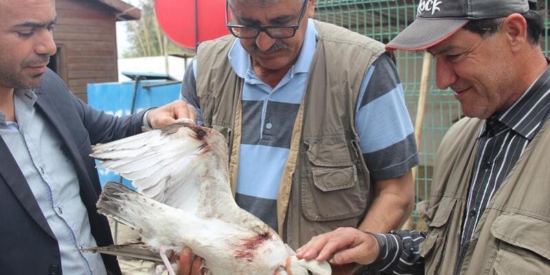 Hatay'da silahla yaralanmış martı  bulundu