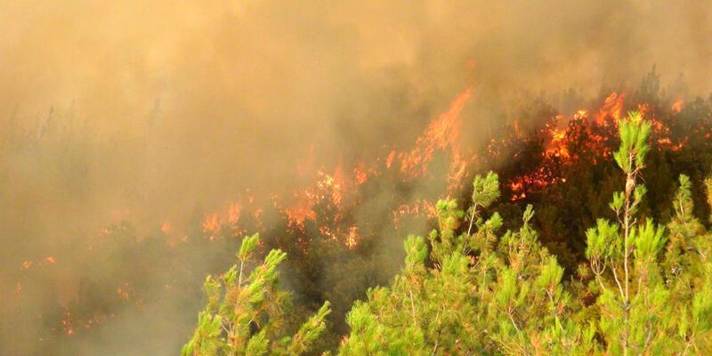 Son dakika... Çanakkale'de yangın ormanlık alana sıçradı