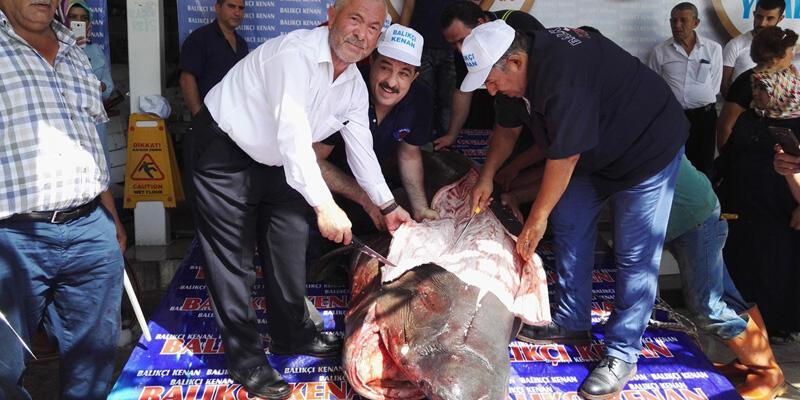 İstanbul'da kanser hastalarına köpek balığı eti dağıtıldı