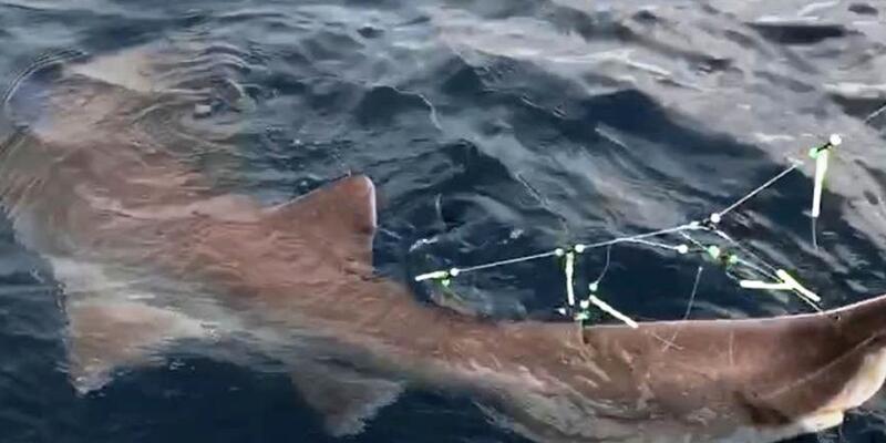 Oltayla köpekbalığı yakaladı, korkudan tekneye çekemedi