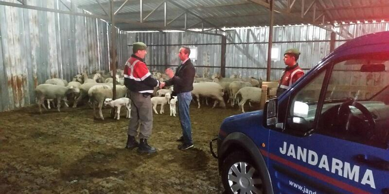 Çalınan 6 koyun bulunarak sahiplerine teslim edildi
