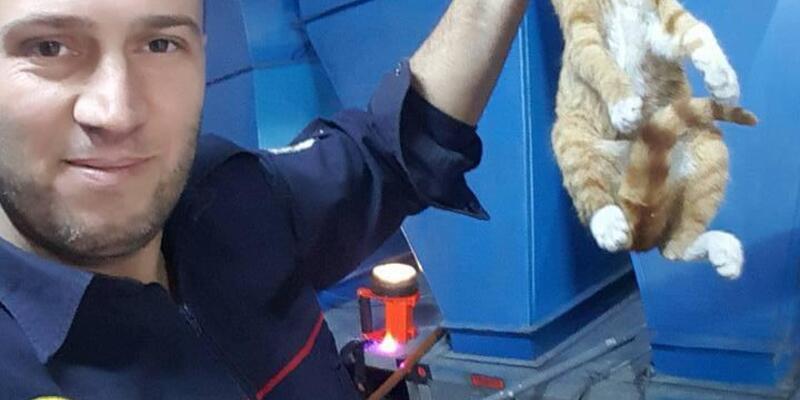 İki duvar arasına sıkışan yavru kediyi, itfaiye kurtardı