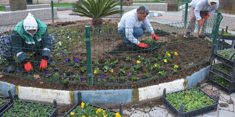 Dikili Belediyesi kendi çiçeğini üretiyor