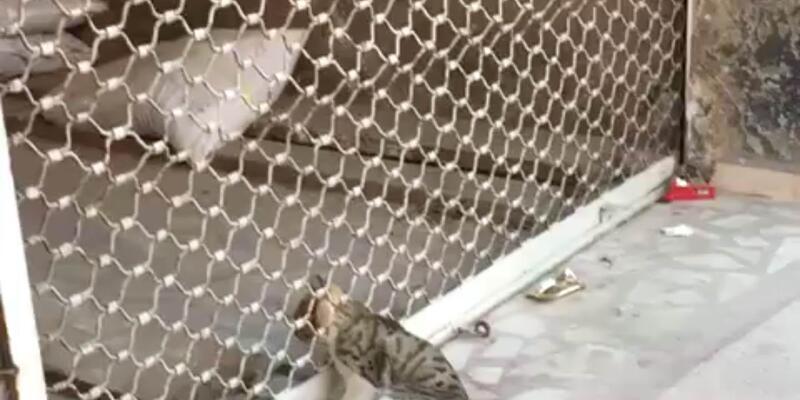 Kepenge sıkışan kediyi itfaiye kurtardı