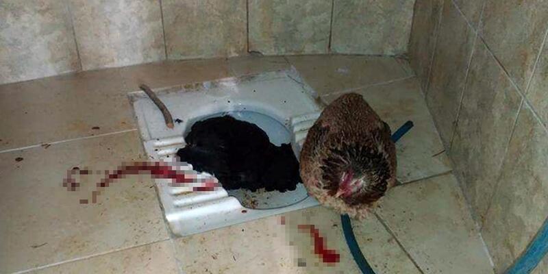 Mezarlık tuvaletinde kesilmiş 2 tavuk bulundu
